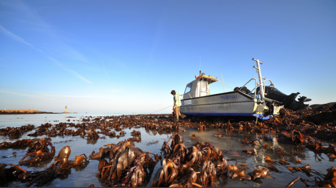 Roscoff Marine Station: Driving Blue-Growth In Brittany Region And Beyond